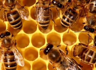 Beekeepers trust in Saint Ambrose
