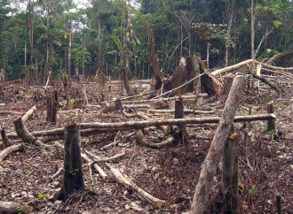Ecocide: A Word to Avoid
