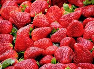 Strawberry, mint and verbena salad