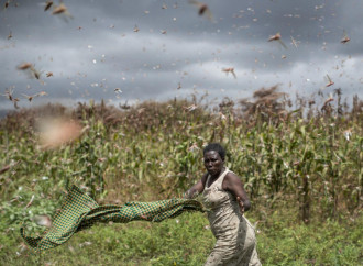 Africa spared by COVID-19, but floored by locusts